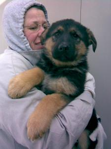 Franny & Hans | German Shepherd Puppy for Sale
