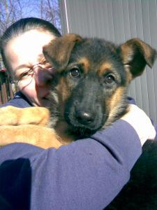 Franny & Max | German Shepherd Puppy for Sale