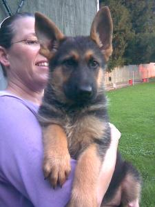 Franny & Gabriel | German Shepherd Puppy for Sale