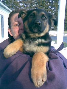 Franny & Candy | German Shepherd Puppy for Sale