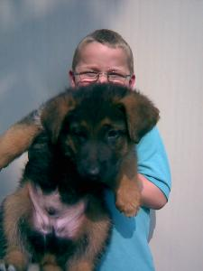 John Patrick & Harley | German Shepherd Puppy for Sale