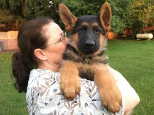 German Shepherd Male Black & Red Puppy